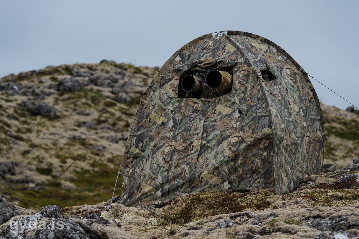 Our hide.